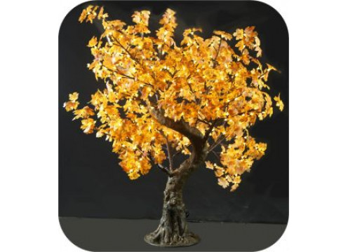 Tree Maple 1.45M Yellow